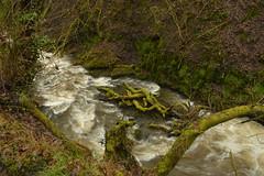 Down the Fast Flowing River (CoasterMadMatt) Tags: sgwdrhydyrhesg2018 mellincwrtfalls2018 rhaeadrmelinycwrt2018 melincourtwaterfall2018 sgwdrhydyrhesg mellincwrtfalls rhaeadrmelinycwrt melincourtwaterfall sgwd rhydyrhesg mellincwrt falls rhaeadr melin cwrt melincourt waterfall waterfalls fall waterfallsofwales welshwaterfalls waterfallcountry riverneath afonneath river rivers neath neathattractions resolfen resolven bwrdeistrefsirolcastellneddporttalbot bwrdeistref sirol castellnedd port talbot decymru southwales de cymru south wales europe landscape naturallandscape landscapes britain greatbritain gb unitedkingdom uk march2018 winter2018 march winter 2018 coastermadmattphotography coastermadmatt photos photography photographs nikond3200