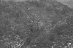 crete_2 (Alex [Fino] LA) Tags: greece creete island bw blackandwhite film svema retro vintage art artefacts noise mountains nature ©alexla lomography monochrome