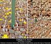 Lithops genus (Succulents Love by Pasquale Ruocco (Stabiae)) Tags: lithops collage aizoaceae mesembs mesembryanthema mesembryanthemaceae mimicry mimetismo mesembryanthemum forumcactusco floweringstones stabiae succulentslove succulents succulente succulent southafrica sassifioriti succulenta sukkuleten succulentas pasqualeruocco piantegrasse piantagrassa plantesgrasses plantassuculentas namibia msgbullettin msg avonia sukkilenten cactusco capeprovince cape cactusworld bcss fgas cssa dkg kuas genus cactus adventures cactusandsucculentjournalusa cactusadventures flower flowering flowers transvaal