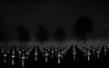 9,387 Graves (The Black Fury) Tags: cemetery omahabeach normandie normandy collevillesurmer fog flag tree lowkey blackandwhite bw