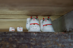 Meow! Food! Rafter Cats   Maneki-neko shrine at Gotokuji Temple (Temple of the Waving Cat) (Joshua Mellin) Tags: cat maneki neko meow food rafter cats   manekineko shrine gotokuji temple waving tokyo japan travel instagram instagood instadaily journalist writer photographer joshuamellin wwwjoshuamellincom joshuamellincom joshua mellin josh joshmellin chicago photography photo photos pic pics picture pictures sony sonyalpha corespondent traveling best 2018 guide forlicense license allrightsreserved 18 tourism socialmedia social media forhire trip eva air international review checkin flight info population currency asia japanese customs traditions spotify applemusic jobs apple mac
