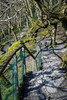 Wooded Walkway (Howie Mudge LRPS BPE1*) Tags: dolgoch woods woodland forest stones fence shadows trees moss grass light shade bright sunny day landscape nature ngc nationalgeographic gwynedd wales cymru uk travel outside outdoors greatoutdoors sony sonyalphagang sonya7ii sonyilca77m2 minoltamc58mmf14pf adaptedlens adaptedglass