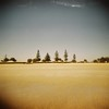 Five pines (sonofwalrus) Tags: holga film lomo lomography scan wallaroo southaustralia australia beach pines trees sand horizon