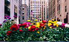 Spring is finally here (RomanK Photography) Tags: architecture buildings manhattan nyc newyorkcity city flowers rockefellercenter sonyalpha spring