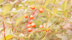 01tree (SnowM28) Tags: kanagawa yamato