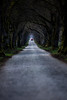 Dämmerlicht (Fotos aus OWL) Tags: landschaft bäume avenue allee natur senne