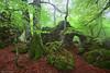 Secrets of the Forest (Hector Prada) Tags: bosque forest bruma mist spring primavera hojas leaves hayedo beech rocks rocas musgo moss green verde atmósfera mood woods niebla fog arno opakua