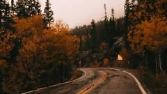 One rainy Autumn day... (miss.interpretations) Tags: 35mm melancholy madworld coloradobeauty wetpavement street raindrops droplets driving road rachelbrokawphotography colorado aspenco aspentrees aspen fall rainyday rain autumn