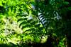 FARNWALD I . FERN FOREST I (LitterART) Tags: farn fern forest wood wald sony