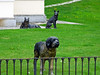 sitz platz (frank28883) Tags: cani cane dog dogs chien chiens perro perros