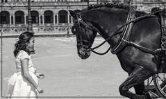 Elena (JLCB PHOTO) Tags: europa españa andalucía sevilla plaza de barrio santa cruz paiasaje retrato femenino mujer comunión monumentos palomas parque estanque agua flores