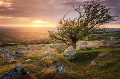 Pew Tor Sunset (Rich Walker75) Tags: pew tor dartmoor devon sunset landscape landscapes landscapephotography tree trees sunsets cloud sky sun clouds plymouth tavistock canon efs1585mmisusm england eos eos80d greatbritain