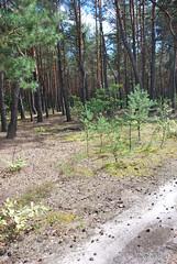 Волинський ліс InterNetri Ukraine 0136065882