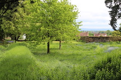 Aldborough Roman Site remains of the Roman town of Isurium Brigantium (CT Photography (Leeds , UK)) Tags: roman site romanruins