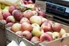 JO_2011_1116-1299 (horacemannschool) Tags: nd farmersmarket kindergarten ks 2011