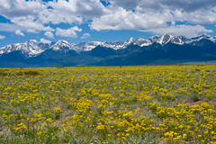 Fields of Gold - Sangre de Cristo Mountains (Christopher J May) Tags: explored explore sangredecristomountains wildflowers colorado westcliffe co sky clouds mountains nikond600 nikonafnikkor28105mmf3545