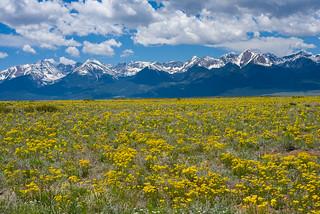 Fields of Gold - Sangre de Cristo Mountains