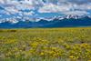 Fields of Gold - Sangre de Cristo Mountains (Christopher J May) Tags: explored explore sangredecristomountains wildflowers colorado westcliffe co sky clouds mountains nikond600 nikonafnikkor28105mmf3545