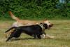 Playin' Hard (lux verum) Tags: playinhard dog hund lux verum luxverum