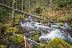 Watershed (writing with light 2422 (Not Pro)) Tags: campcreek creek stream logs trees rocks moss ferns green lush thegreatpnw landscape richborder sonya7