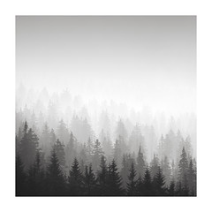 ghost of a forest | poland, 2018 (philippdase) Tags: poland szklarskaporęba szrenica karkonosze foggy forest philippdase nikon nikond750 blackandwhite blackandwhitelandscape landscape trees