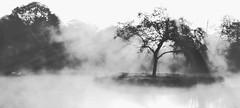 Misty morning (Zèè) Tags: tree mist lake black bw blanc blackandwhite white noir noirblanc nature normandy normandie water trees monochrome island etang sunrise