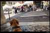 IMG_20180513_122427 (anto-logic) Tags: cane pongo labrador animali amicianimali amici ritratto mercatino market passeggiata walking domenica sunday spring primavera divano couch relax primopiano meravigliosa libertà libero dolce bello amore fedeltà dof profonditàdicampo bokeh dog animalfriends friends freedom free portrait foreground sweet beautiful love fidelity natural nature pointofview pov depthoffield cute pets cuccioli lovely gorgeous nice pretty wonderful focus postproduzione postproduction lightroom filtro filter effetti effects photoshop alienskin huawei p20pro