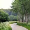 Green Quietness (Annemieke Prozée) Tags: path quietness trees green
