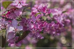 Le printemps est arrivé...la,la,la, la laire... (josettegoyer) Tags: richelieu 37 régioncentre france parc