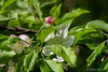 Sneak peak into the new week (Sockenhummel) Tags: fuji xt10 blüte baumblüte baum blätter versteckt hidden sneakpeak preview
