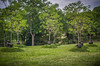 """It's obvious.....They are a bunch of """"tree huggers."""" (donnieking1811) Tags: tennessee nashville cheekwoodbotanicalgardenandmuseumofart cheekwood trees treehuggers outdoors nature gardens art statues sky clouds hdr 60d canon lightroom photomatixpro green"""