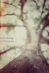 High (Mister Blur) Tags: high sky tree depthoffield dof shallow bokeh blur branches casa faller mérida yucatán méxico itzimna thecure snapseed nikon d7100 35mm f18 rubén rodrigo fotografía