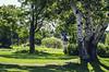 old tree (szlavid) Tags: nikon d7000 nikkor 51mm 18g nature park tree bupdapest hungary kopaszigát city urban europe