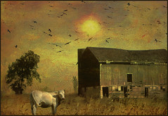 Rural scene (bdira3) Tags: rural barn cow birds sun peaceful painterly