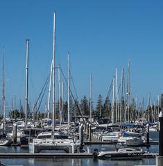 Masts ... reaching for the sky (idunbarreid) Tags: boats marina
