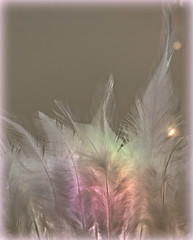 2018 Smile on Saturday: Backlit Close Up (dominotic) Tags: 2018 backlitcloseup smileonsaturday backlitfeathers whitefeathers pink sundaylights sydney australia