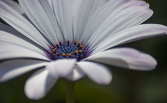 blanche (renaud5962) Tags: white pentax flower closeup fleur