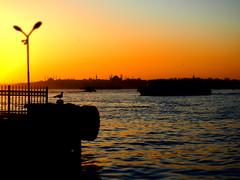 İstanbul (zenginuyak) Tags: m43 olympus seagull cityview seaview sunset sunbath sundown goldenmoment goldenhour boat