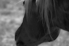 Horse.jpg (Gerard P...) Tags: photographies photos west gerard pena monochrome wildnature photography black white calmandpeace photo blackandwhite gerardpenaphotography gerardpena