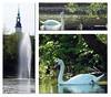 Morgens.... (peterphot) Tags: frankenberg schilfteich april swans schwäne fontäne sachsen waterbirds