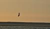 Sunset kitersurfers (vanderven.patrick) Tags: sun sunset sunny sundown surf kitesurfing beach beachphotography watersports