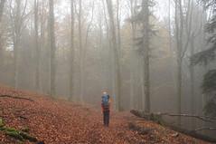 Foresta di Camaldoli nella nebbia (LLauraNLS) Tags: appennino casentino forestecasentinesi foresta forest sentierodelleforestesacre trekking trekkingdelleforestesacre hiking dogtrekking landscape paesaggi foliage nature mountains pentax