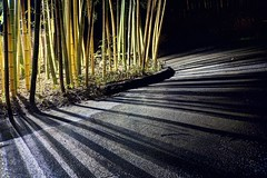 Who invented barcodes again? (PeterThoeny) Tags: saratoga california siliconvalley sanfranciscobay sanfranciscobayarea southbay hakonegardens japanesegarden garden park bamboo bambooforest forest road light lightsandshadows shadow night sony a7 a7ii a7mii alpha7mii ilce7m2 fullframe vintagelens dreamlens canon50mmf095 canon 1xp raw photomatix hdr qualityhdr qualityhdrphotography fav200 lines wood tree