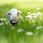Dave in daisies thumbnail