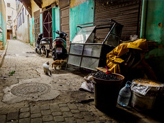 OLIVAS (vixvaporus) Tags: fez morocco yellow street travel people urban cat cats explore olives penf color streetphotography
