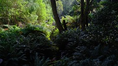 Creek, Lilli Pilli Gully (335semi) Tags: australia vic victoria nationalpark np national park wilsons promontory wilsonsprom fuji fujixt2 lillipilli gully