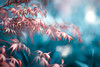 Unreal Acer (Tom Birtchnell) Tags: acer tree spring leaves blue pink canon nature colourful