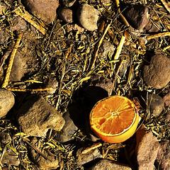 Alimento Abandanado (6) (momentspause) Tags: food foodwaste abandonedfood elpaso canont3i canonef50mmf18 niftyfifty orange naranja