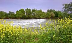 Rio Ebro (pascual 53) Tags: ocaso flores primavera tormenta lluvia aguasbravas canon5ds 1635mm rincondesoto larioja