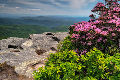 Hawksbill Mountain - NC  ver. 3.0 (Reid Northrup) Tags: rrs nature clouds forest hawksbillmountain landscape linvillegorge mountain nikon northcarolina rhododendrons rocks trees rock sky flower flowers reidnorthrup